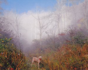Buster_n_fog